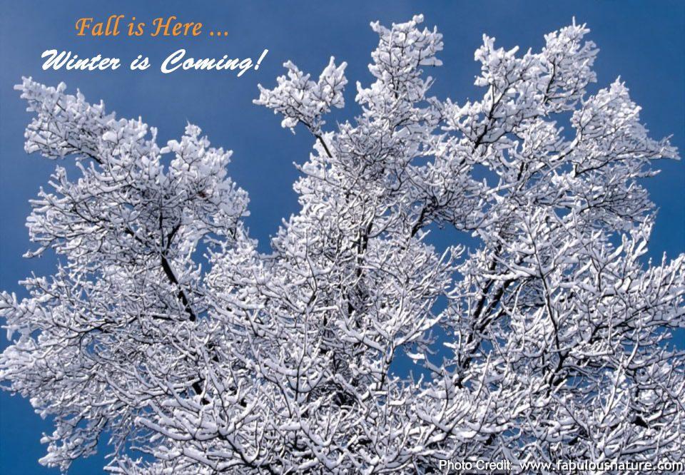 Snow Branches, Minnesota